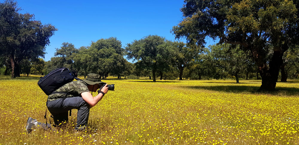fotografo-dehesa-flores