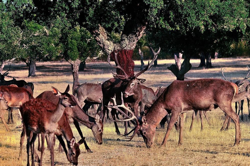 grupo-ciervos