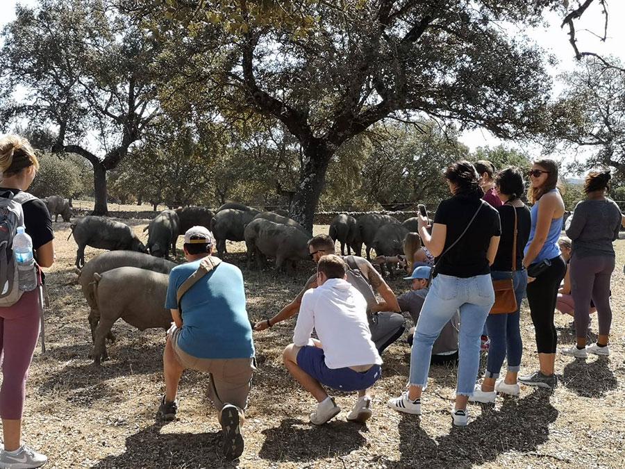 Turistas viendo a los cerdos