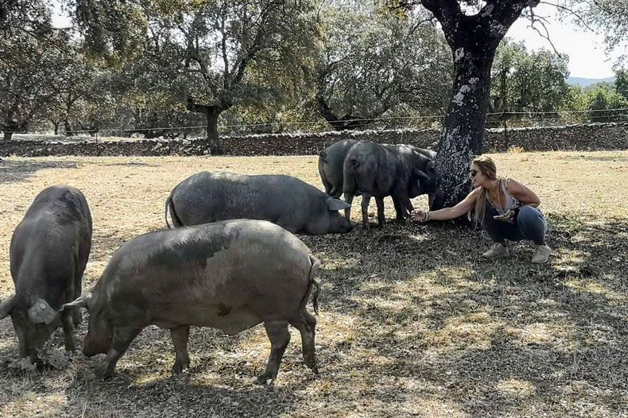 Mujer dando de comer a los cerdos en Monfragüe