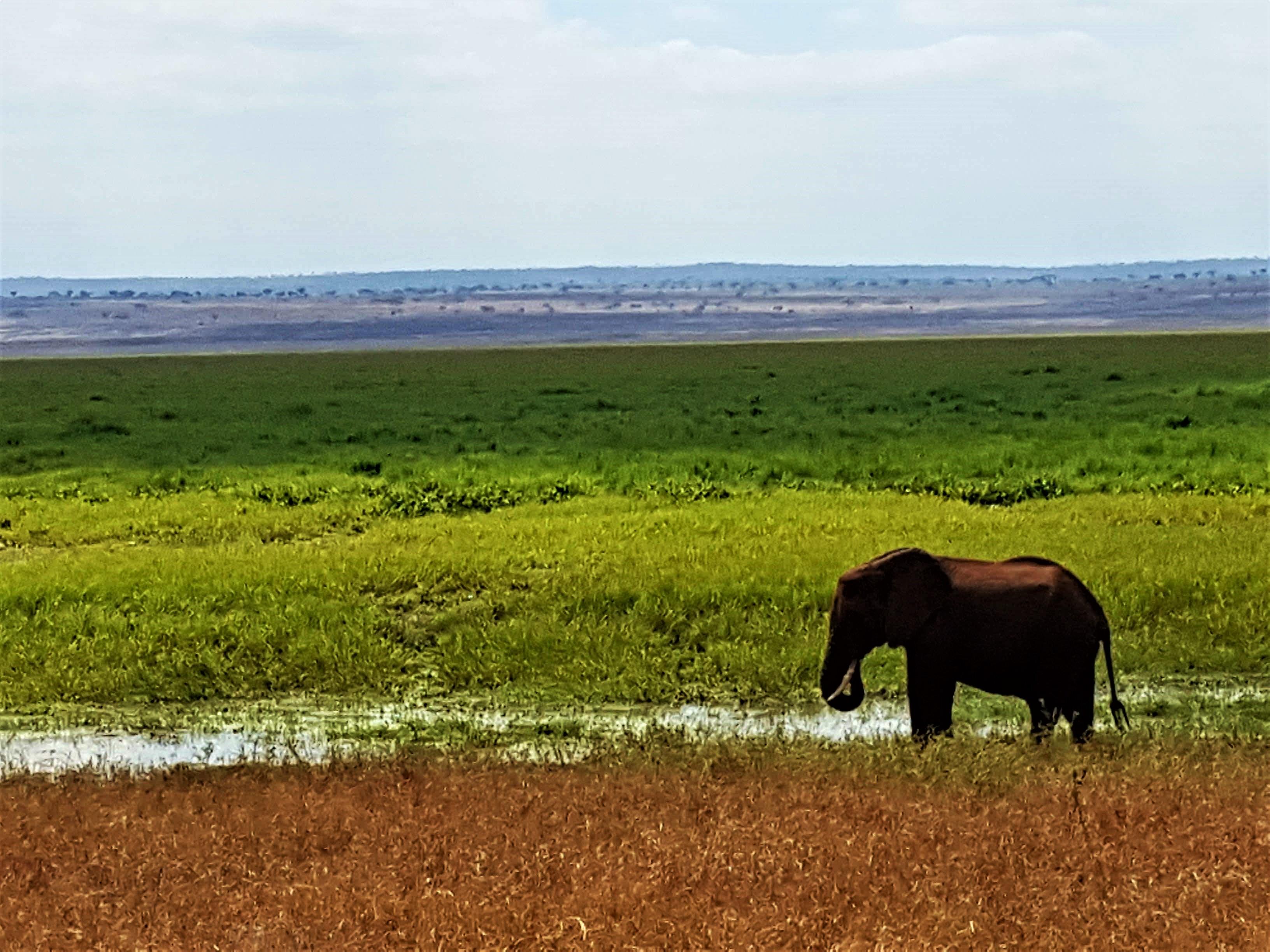 Paisaje con Elefante