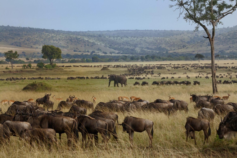 Animales migración