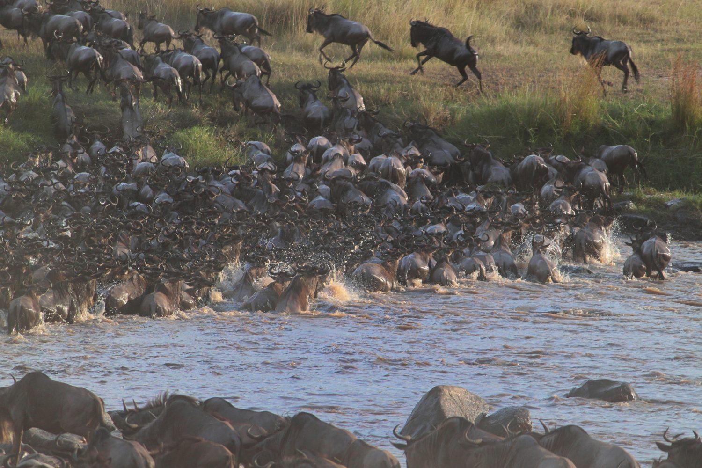 Animales corriendo migración