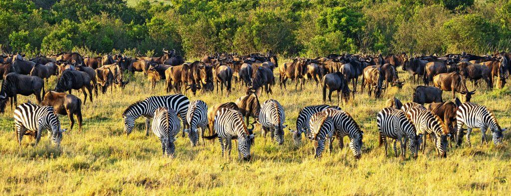 Migración de animales