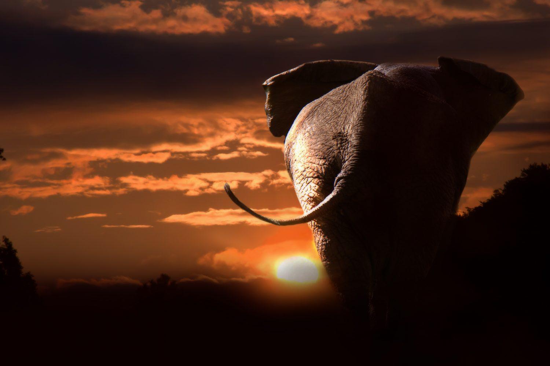 Elefante paisaje Tanzania