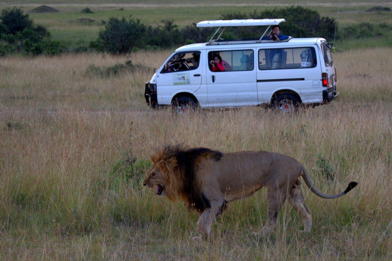 León Safari Tanzania